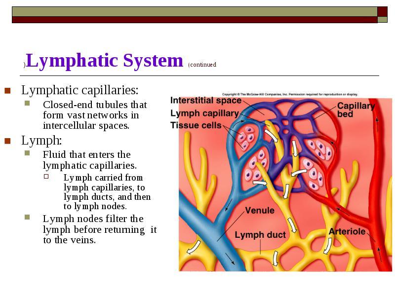 Cardiovascular System Cvs Cardiovascular System Cvs