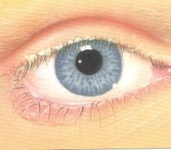 a blepharitis befolyásolja a látást)